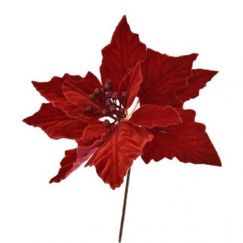 Piros mikulásvirág - bársony