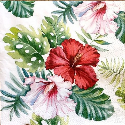 Viragos-szalveta-tropusi-novenyek