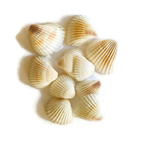 Kagyló csomag1